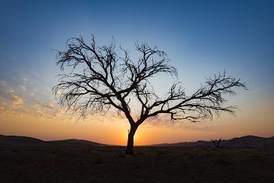 Acacia Tree Near Dune 45 in the Namib Desert at Sunset, Sossusvlei, Namin-Naukluft Park-Alex Treadway-Photographic Print