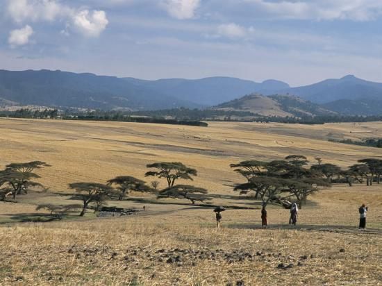 Acacia Trees on High Grasslands in Front of Bale Mountains, Southern Highlands, Ethiopia, Africa-Tony Waltham-Photographic Print