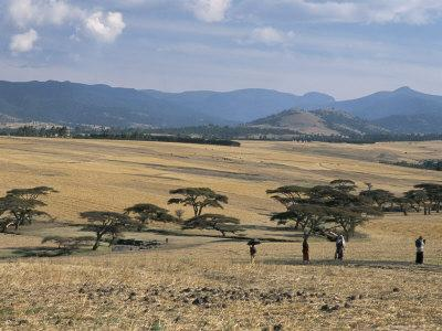 https://imgc.artprintimages.com/img/print/acacia-trees-on-high-grasslands-in-front-of-bale-mountains-southern-highlands-ethiopia-africa_u-l-p1shbg0.jpg?p=0