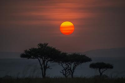 Acacia Trees Under The Setting Sun In Maasai Mara National Reserve-Andrew Coleman-Photographic Print