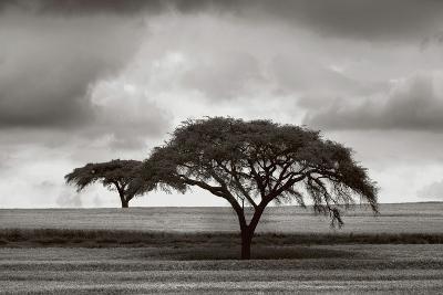 Acacia Trees-Jorge Llovet-Art Print