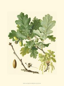Acorns & Foliage II