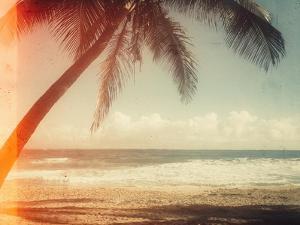 Single Palm by Acosta
