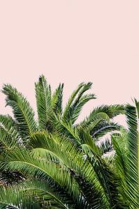 Tropical Leaves on Blush II by Acosta