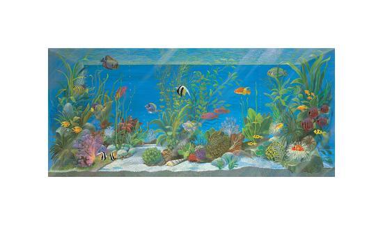 Acquario-Isabella Cuccato-Giclee Print