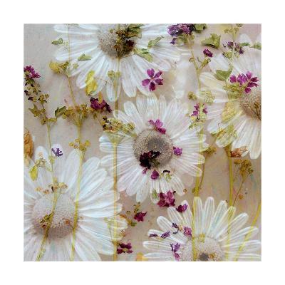 Acre Flowers-Alaya Gadeh-Art Print