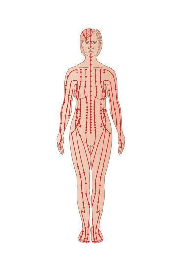 Acupuncture Points, Artwork-Peter Gardiner-Photographic Print