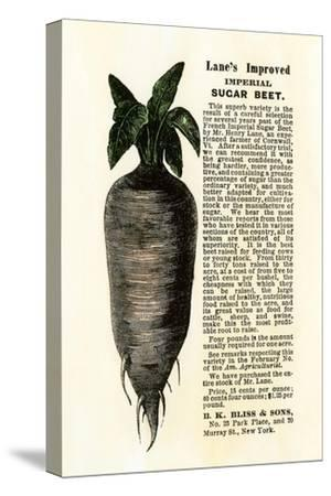 Ad for Lane's Improved Imperial Sugar Beet, B.K. Bliss and Sons, New York, 1872