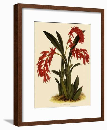 Ada Aurantica-John Nugent Fitch-Framed Giclee Print