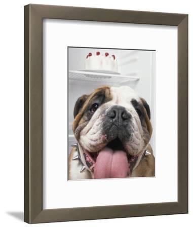Bulldog in front of refrigerator