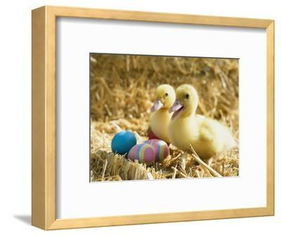 Pair of ducklings with Easter eggs