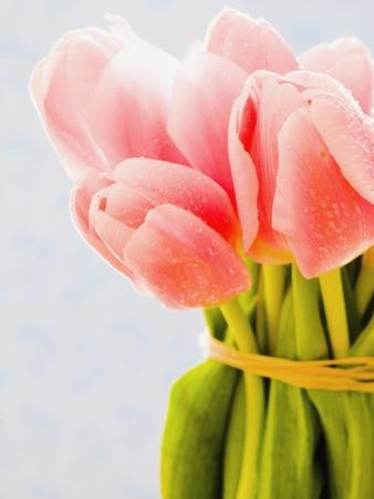 Pink tulips by Ada Summer
