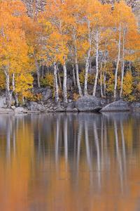 Golden Coloured Fall Foliage and Reflections on the Shores of Intake 2 Lake in the Eastern Sierras by Adam Burton