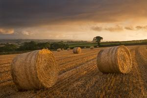Hay Bales in a Ploughed Field at Sunset, Eastington, Devon, England. Summer (August) by Adam Burton