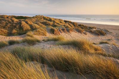 Marram Grass on the Sand Dunes of Braunton Burrows, Looking Towards Saunton Sands, Devon