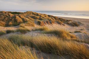 Marram Grass on the Sand Dunes of Braunton Burrows, Looking Towards Saunton Sands, Devon by Adam Burton