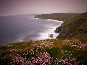 Sea Thrift growing on the clifftops above Land's End, Cornwall, England. Spring (May) 2009 by Adam Burton