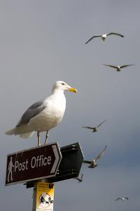 Seagulls in Padstow Harbour, Cornwall, England by Adam Burton