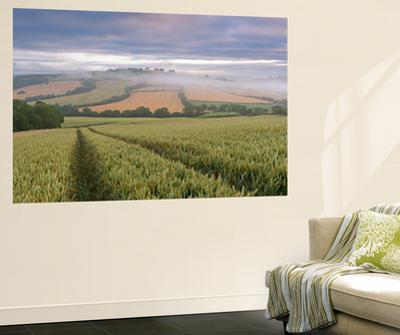 Wheat Field and Rolling Countryside at Dawn, Devon, England. Summer (July)