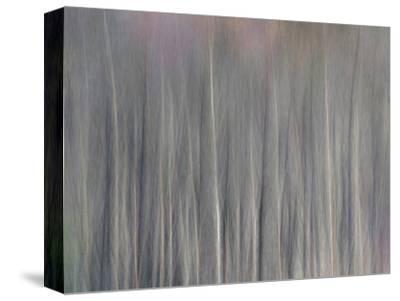 Abstract Tree Pattern, Great Smoky Mountains National Park, North Carolina, Usa