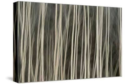 Abstract Tree Pattern, Great Smoky Mountains National Park, Tennessee