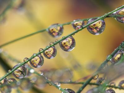 Autumn Leaves Reflected in Raindrops on Blades of Grass, Acadia National Park, Me by Adam Jones