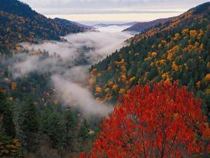 Autumn View of Fog from Morton Overlook, Great Smoky Mountains National Park, Tennessee, USA by Adam Jones