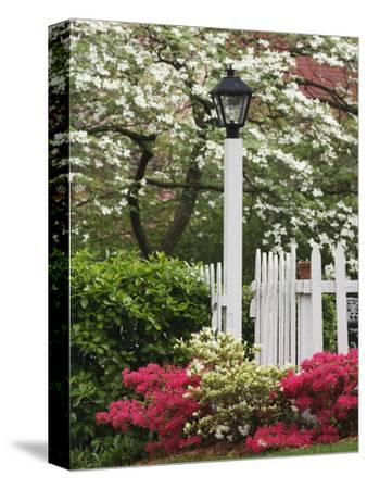 Azaleas and Flowering Dogwood Tree Along White Picket Fence