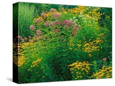Black-eyed Susans and Sweet Joe-Pye Weed in the Holden Arboretum, Cleveland, Ohio, USA