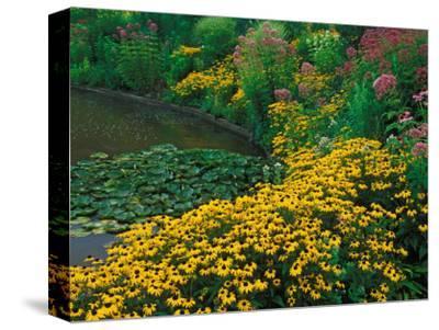 Black-Eyed Susans, Rudbeckia Hirta, and Joe Pye Weed, Holden Arboretum, Cleveland, Ohio, USA