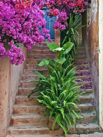 Bougainvillea Flowers, Philodendron, and Ferns on and around Building Steps, Crete, Greece by Adam Jones