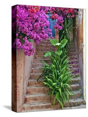 Bougainvillea Flowers, Philodendron, and Ferns on and around Building Steps, Crete, Greece