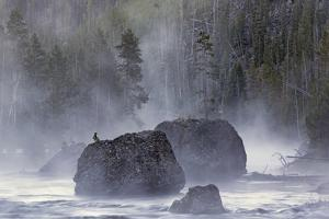 Boulders in Early Morning Mist, Gibbon River, Yellowstone National Park, Wyoming by Adam Jones