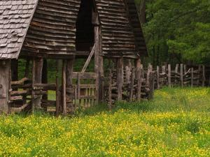 Buttercups and Cantilever Barn, Pioneer Homestead, Great Smoky Mountains National Park, N. Carolina by Adam Jones