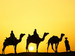 Camels and camel driver silhouetted at sunset, Thar Desert, Jodhpur, India by Adam Jones