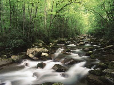 Canopy over Big Creek, Great Smoky Mountains National Park, North Carolina, USA