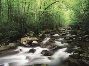 Canopy over Big Creek, Great Smoky Mountains National Park, North Carolina, USA by Adam Jones