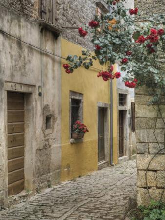 Cobblestone Street, Bale, Croatia by Adam Jones