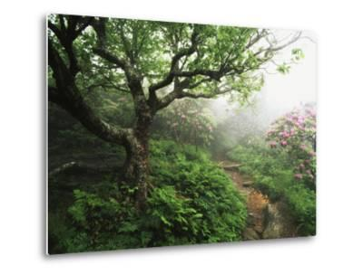 Craggy Gardens, Pisgah National Forest, North Carolina, USA