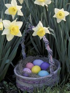 Easter Basket Among Daffodils, Louisville, Kentucky, USA by Adam Jones
