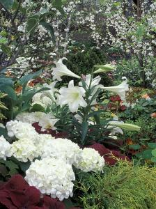 Easter Lilies and Hydrangea Flowers by Adam Jones