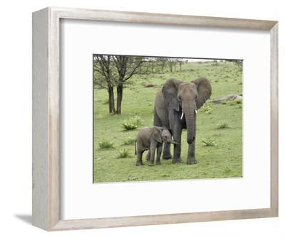 Female African Elephant with baby, Serengeti National Park, Tanzania