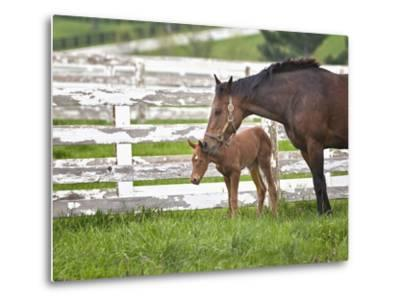 Female Thoroughbred and Foal, Donamire Horse Farm, Lexington, Kentucky