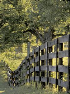 Fence at Sunrise, Bluegrass Region, Lexington, Kentucky, USA by Adam Jones