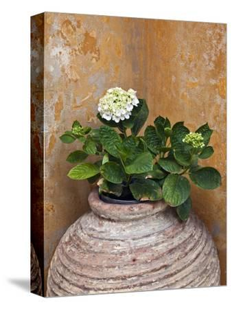 Flower in Pot, Crete, Greece