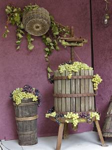 Grape Exhibit on Float, La Festa Dell'Uva, Impruneta, Tuscany, Italy by Adam Jones