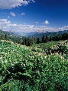 Grooved Milkvetch and Mt. Crested Butte, Gunnison National Forest, Colorado, USA by Adam Jones