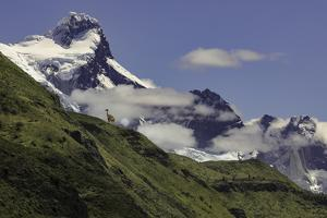 Guanaco on steep slope, Torres del Paine National Park, Chile, Patagonia, Patagonia by Adam Jones