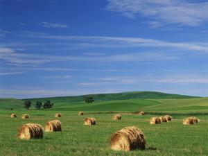 Hay Bales, Palouse Farm Country, Washington, USA by Adam Jones