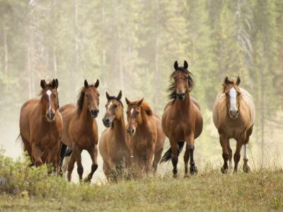Horses on Ranch in Montana During Roundup by Adam Jones